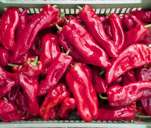 Produktbild Saatgut: Paprika 'Dulce Italiano'