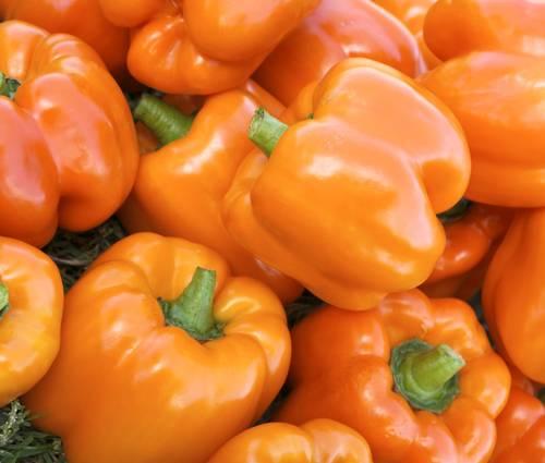 Produktbild Saatgut: Paprika 'Cubo Orange'