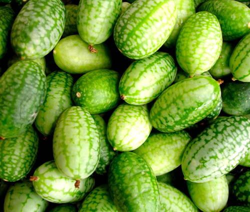 Produktbild Saatgut: Melothria, Mexikanische Mini-Gurke