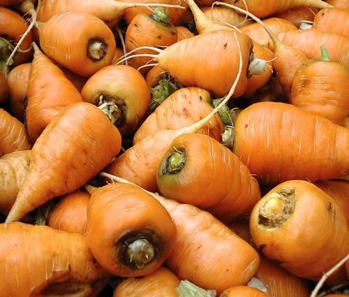 Produktbild Saatgut: Möhre 'Ochsenherz'