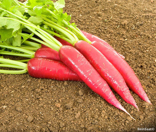 Produktbild Saatgut: Rettich 'Ostergruß rosa 2'