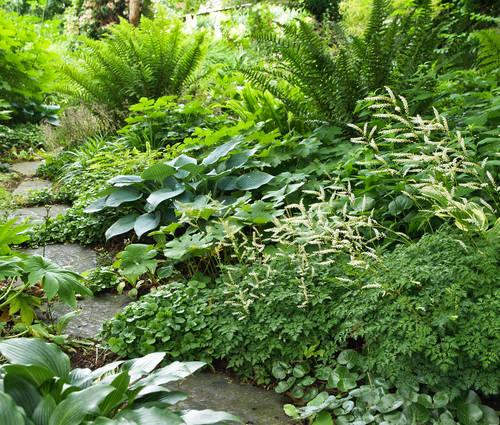 Produktbild Schattiger Vorgarten