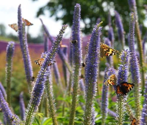 Produktbild Insektenfreude rund ums Jahr (sonnig)