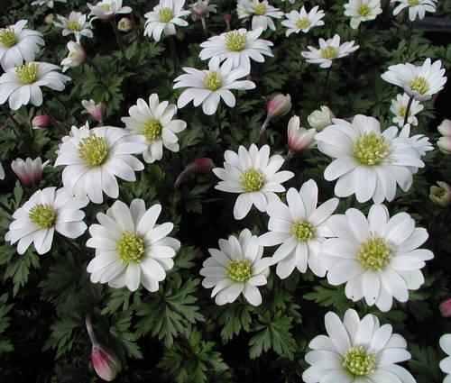 Produktbild Frühlingsgarten in Weiß