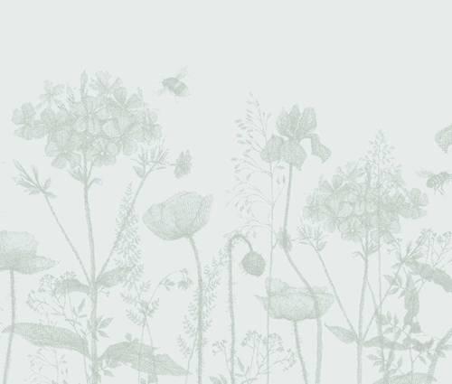 Produktbild Hyacinthoides hispanica, weiß