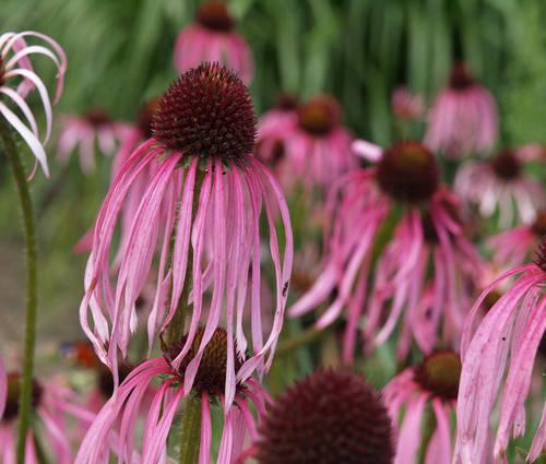 Produktbild Blütenreigen der Trockenkünstler