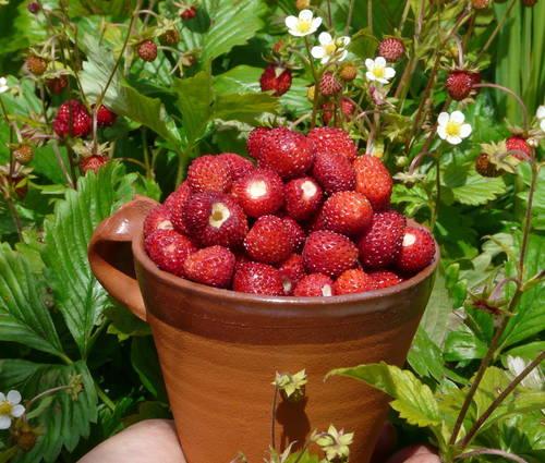 Produktbild BIO-Erdbeeren